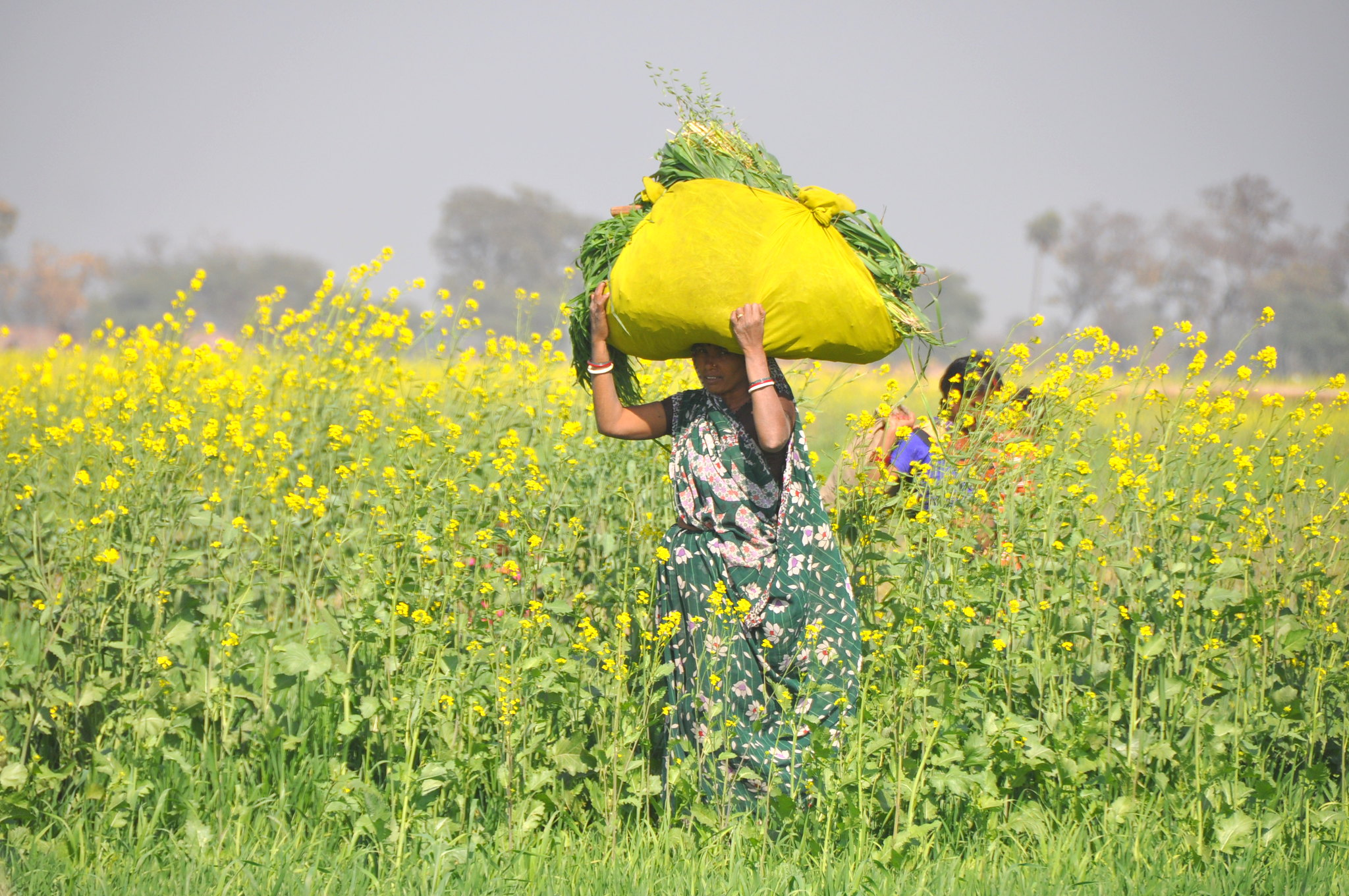 Bihar woman in the fields